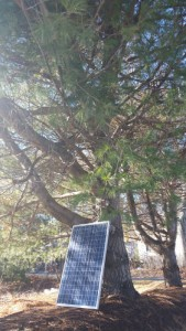 Solar Panels vs Trees