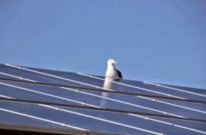 Solar Panels and Bird Poo