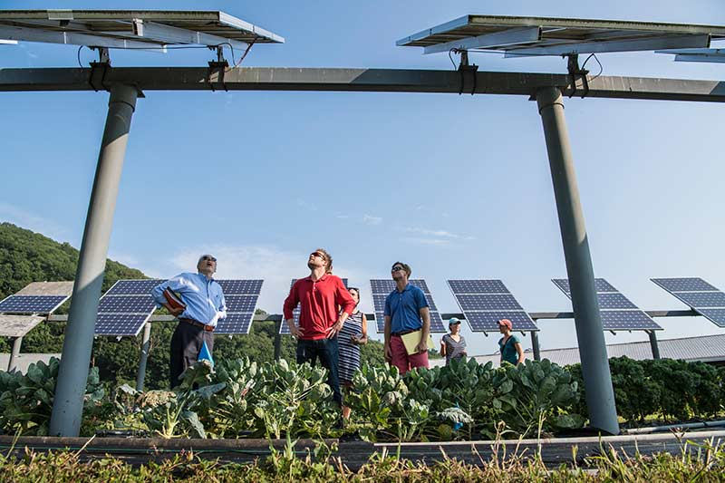 three men and three women looking up at ground-mounted solar panels