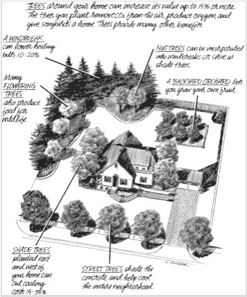 a drawing of a house with trees planted around it to maximize heating and cooling efficiency